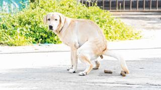 כלב עושה צרכים ברחוב