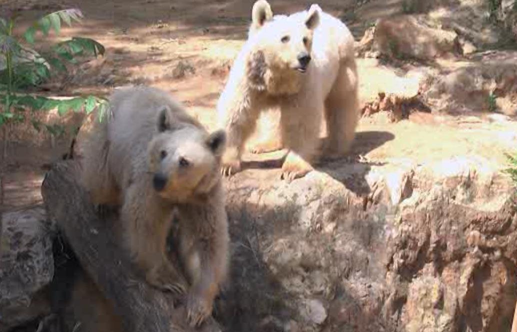 הדובים בגן החיות התנ״כי