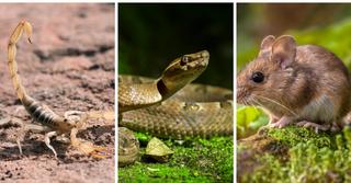 עכבר, נחש ועקרב. צילום: shutterstock