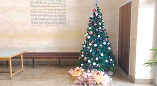 עץ האשוח בכניסה לפקולטה למשפטים