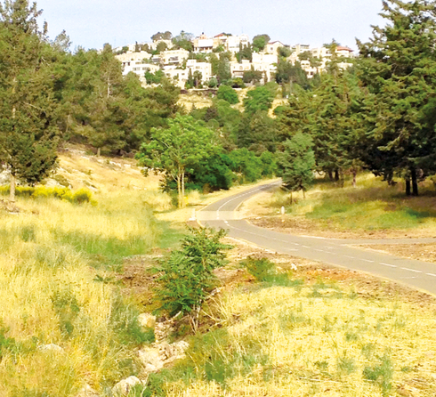 היער בנחל צופים. מאבק רחב היקף. צילום: מתוך ויקיפדיה