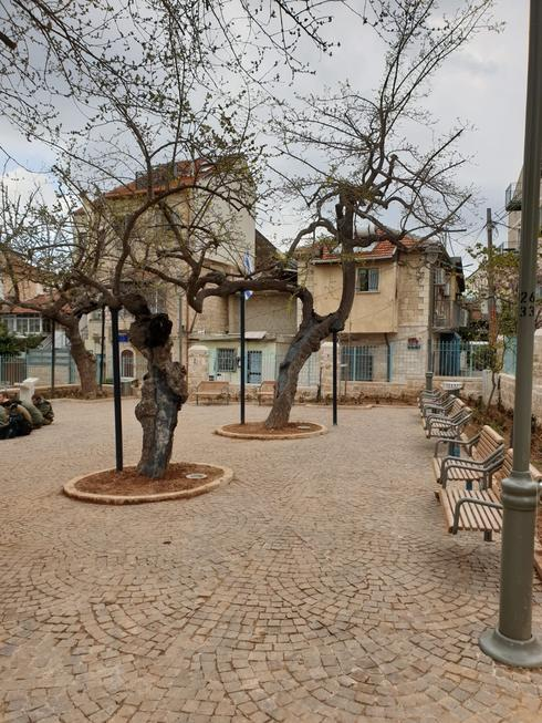 גן התות המשופץ (צילום: באדיבות מנהל קהילתי לב העיר)