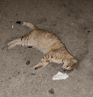 גופת אחד החתולים | צילום: פרטי