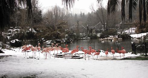 הפלמנגו בשלג. הסתיים באסון | צילום: יערה FOREST תמרי