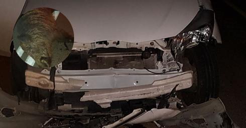 הרכב הפגוע. צילום: פרטי